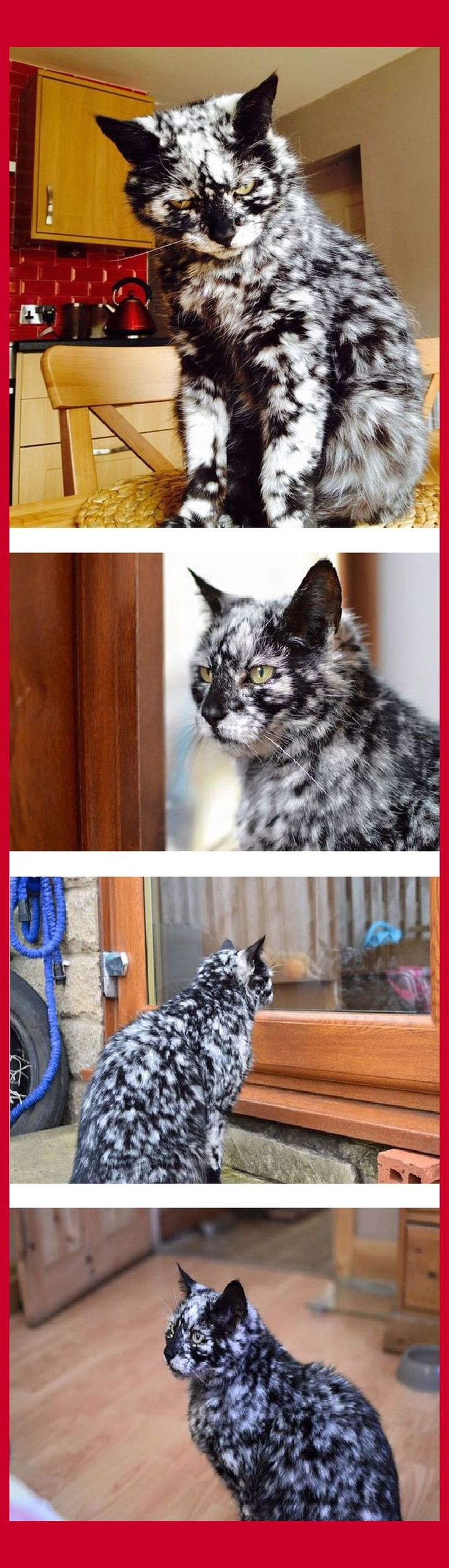 19-Year-Old Black Cat Turns Into A Nordic God Due To A Rare Skin Condition -- QUELLE: by Elizabeth at www.boredpanda.com