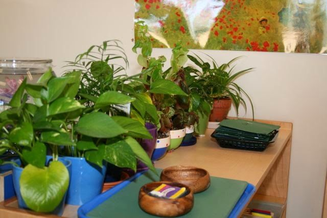 Holistic Education: Feng Shui in the Classroom
