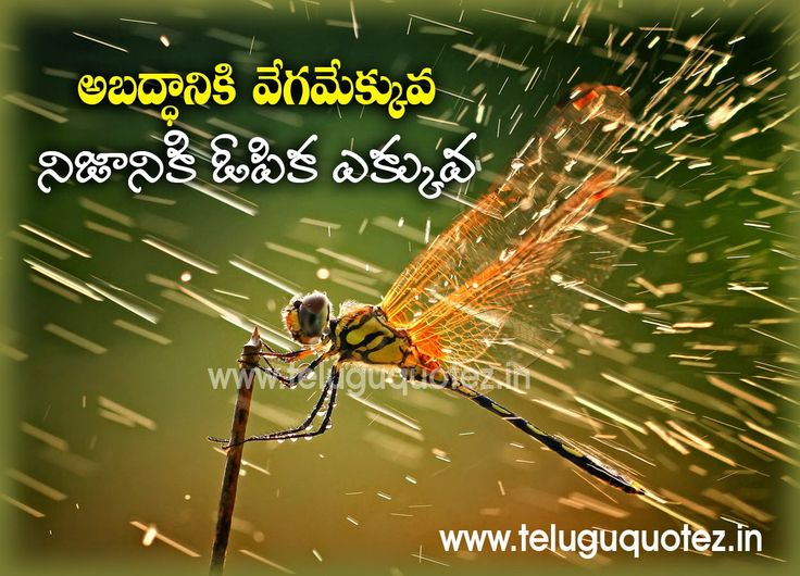awesome-Quotations-in-Telugu-on-life-for-friends-for-friends-to-post-facebook