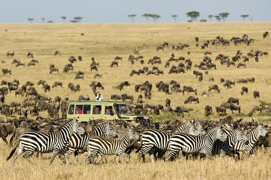 Witness the Great Migration in Tanzania's Serengeti National Park. #travel #bucketlist