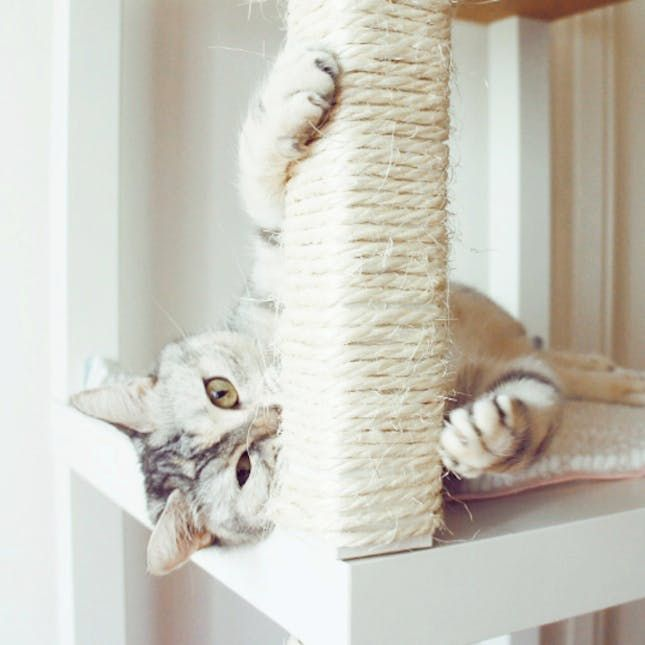 13 IKEA Hacks Your Pets Will Appreciate