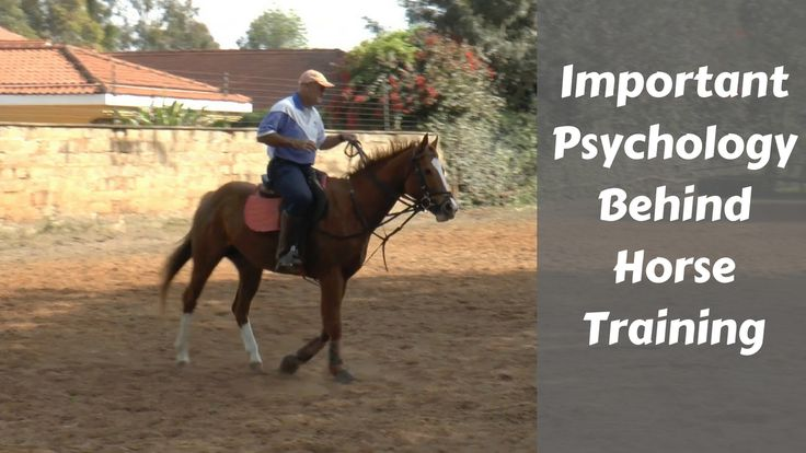 This is an IMPORTANT video: The right Horse Training Psychology will make all the difference to your horse schooling. First I show you the wrong way - & then we get into the right...