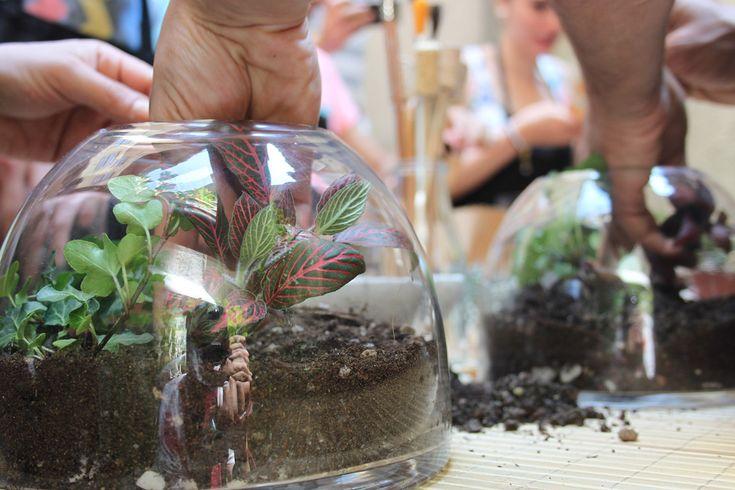 14 Haziran 2015 Pazar günü, Cloud Nine Patisserie'nin şirin arka bahçesinde bir Teraryum Workshop gerçekleştirdik. Misafirlerimiz isteklerine göre fittonia ve sarmaşık bitkilerinden ya da kaktüslerden teraryum yapmayı öğrendiler ve akıllarına takılan soruların cevaplarını aldılar. Workshop'tan objektifimize takılanlar…