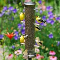 Golden finches: Gold Finch, Birds Gardens, Clean, Birds Feeders, Mesh Finch, Finch Feeders, American Goldfinch, Beautiful Birds, Wild Birds