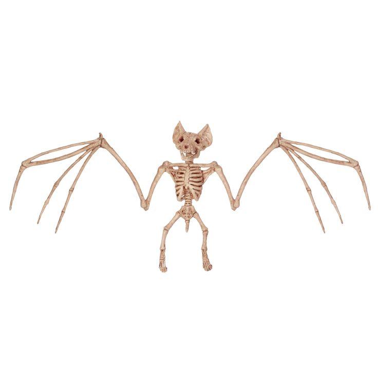 crazy bonez skeleton bat halloween prop decoration dead bones new for 2016 for like the crazy bonez skeleton bat halloween prop decoration dead bones new - Skeleton Decorations