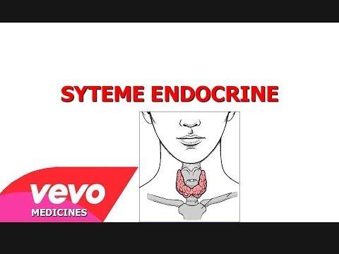 Le système endocrinien - YouTube