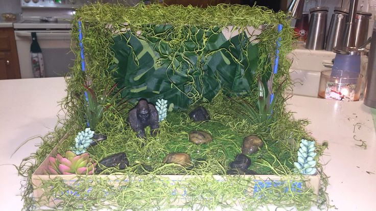 Gorilla Habitat Diorama For 5th Grade Science Project