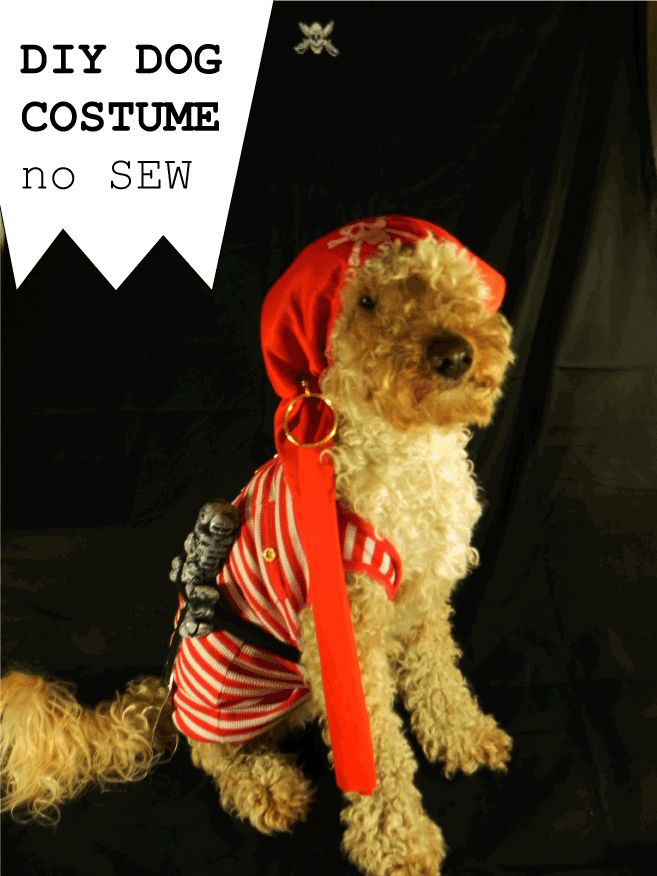 Best 25 diy dog costumes ideas on pinterest dog halloween diy dog costume no sew solutioingenieria Image collections