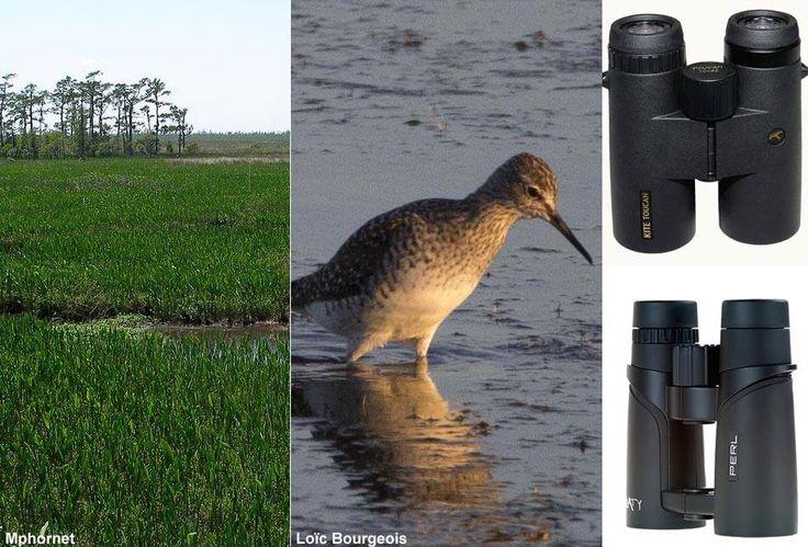Où observer les oiseaux en Louisiane en juillet ? Quel est ce limicole observé en Camargue ? Quel modèle de jumelles choisir pour moins de 300 euros ? Voici quelques-uns des sujets récents abordés sur nos forums, n'hésitez-pas à vous participer, ils sont ouverts à tous, observateurs débutants comme confirmés.