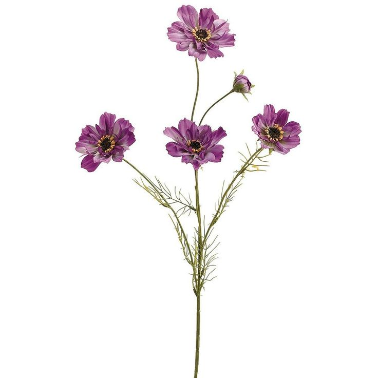 """Silk  Cosmos Spray in Purple<br>32"""" Tall $81 for one flower in each of 108 columns"""