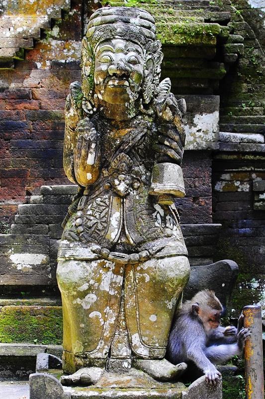 Bali ‹ ... momo és makuka...… momo és makuka…
