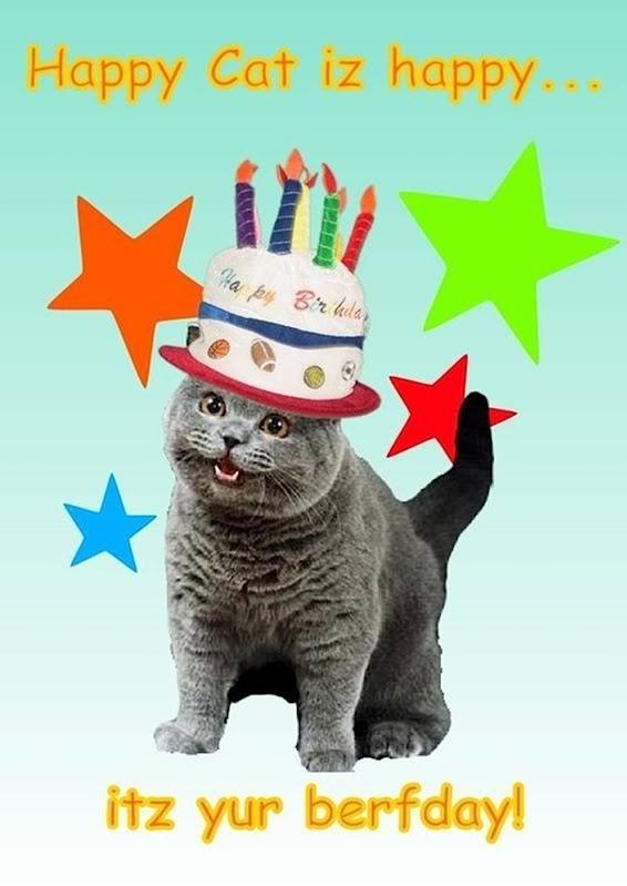 Happy Birthday Cat Cats Pinterest Cats Happy