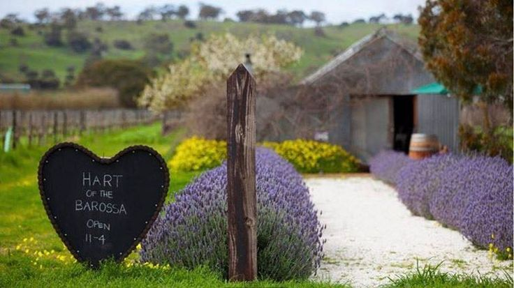 Join Hart of the Barossa' for wine-tasting in their 'Old Bar'n'. Hart of the Barossa is a family owned artisan wine brand. Planted in 1902, the Hart block is the oldest certified organic vineyard in the Barossa Valley.  Next open day is Sunday May 7.