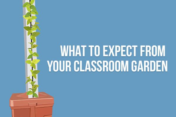 What to Expect From Your Classroom Garden