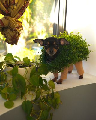 Chia Pet Halloween costume -- One of the only pet costumes I