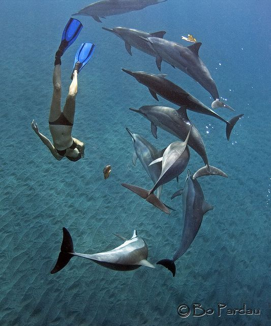 Dive and swim with dolphins <3