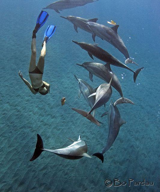 Nadar con delfines...                                                                                                                                                     Más
