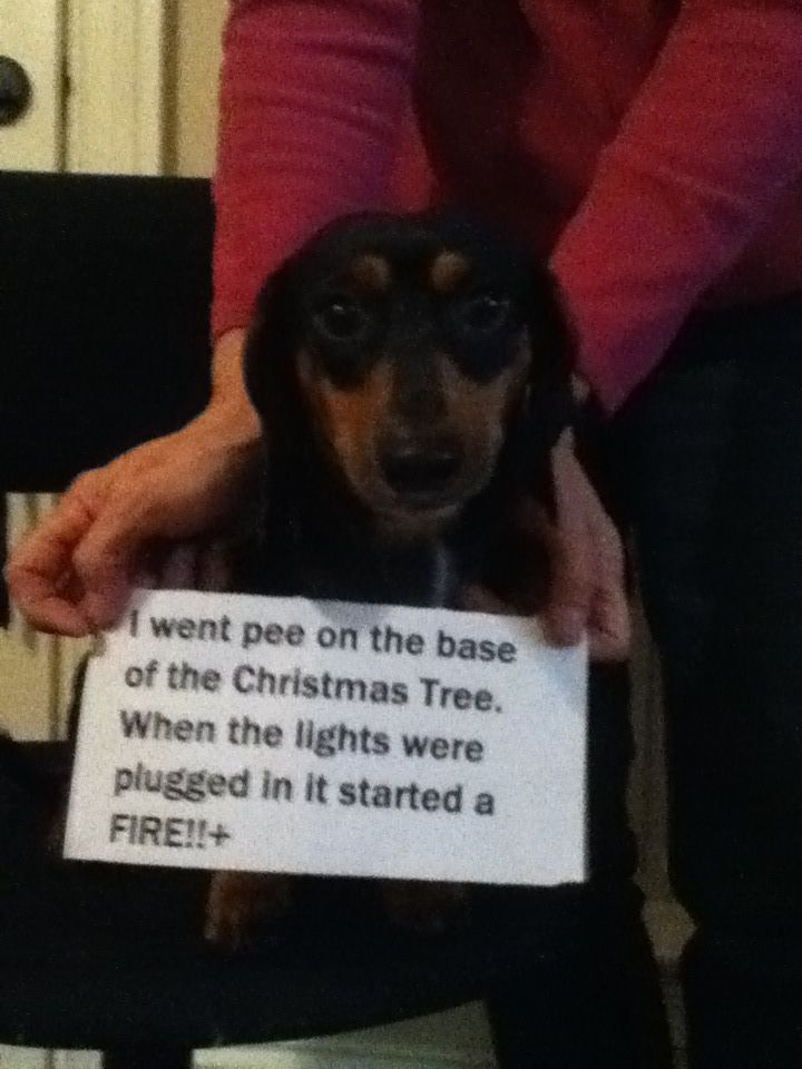 64 best Dog Shaming images on Pinterest | Dog shaming, Cat shaming ...