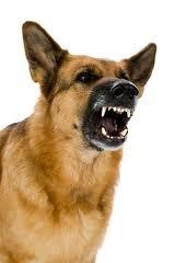 Google Image Result for http://www.missouripersonalinjurylawyerblog.com/dog_aggressive_4464403.jpg