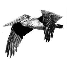 ... Pelican Tattoo on Pinterest | Alligator Tattoo Tattoos and Otter