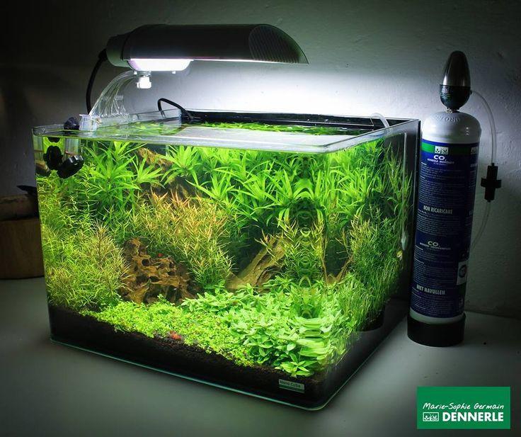 Les 243 meilleures images du tableau aquarium sur for Nano aquarium eau douce