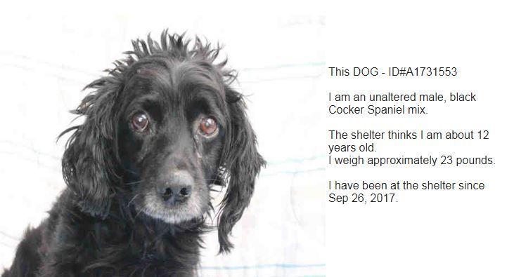 Cocker Spaniel dog for Adoption in Beverly Hills, CA. ADN-712331 on PuppyFinder.com Gender: Male. Age: Senior