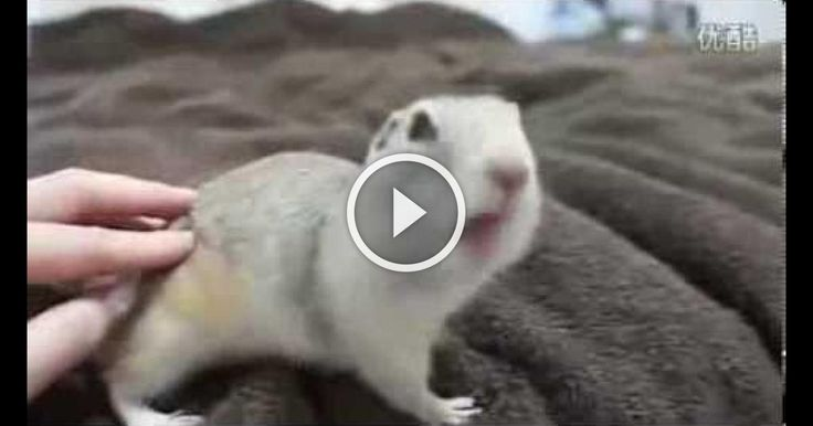 Best Funny Animal Videos Compilation 2013
