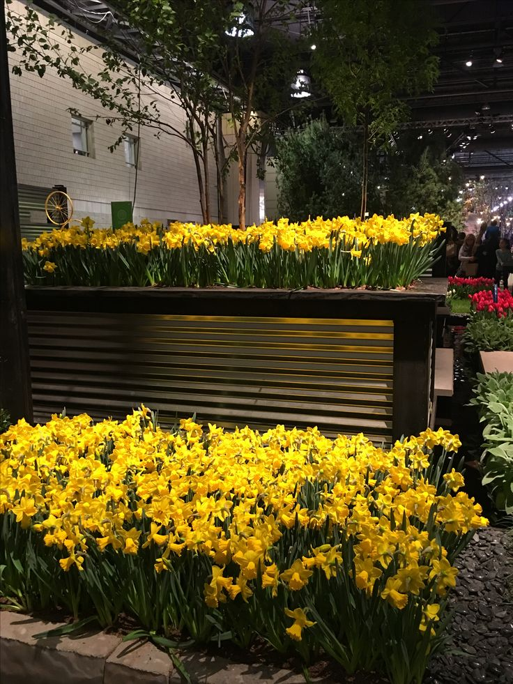 17 best daffodils from holland flower show images on for Garden design netherlands