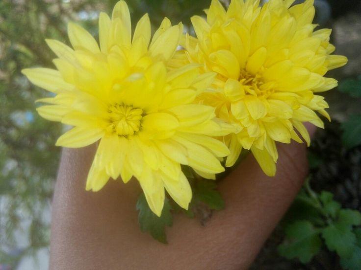 Flowers  bloom....
