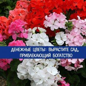 Денежные цветы: вырастит…