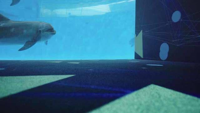 下関市立しものせき水族館「海響館」【運営:公益財団法人下関海洋科学アカデミー(所在地:山口県下関市、 理事長:三木潤一)】では、 この夏より、イルカが出す音をコンピューターで色と形に変換して映像化するイルカのデジタルアート「Draw-phin(ドローフィン)」を7月15日より開催します。