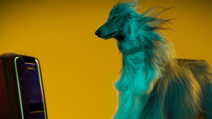 Psy wolą Beyoncé od Beethovena. Utwory o szybszym metrum i mocniejszym rytmie częściej wywołują merdanie ogona niż uspokajające koncerty muzyki klasycznej.