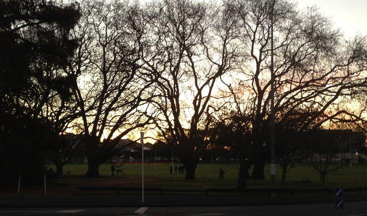 Late afternoon sun, Victoria Park