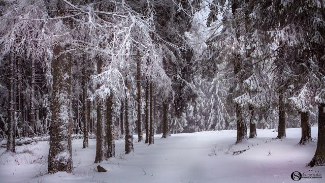 Octavian Serban: Winter tale...