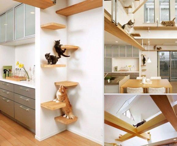 Desain Furniture Kreatif Ramah Kucing - Cat-Transit-System