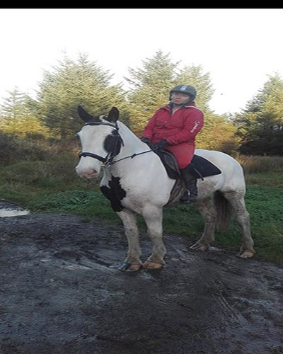 Lovely Irish Cob for sale  Ride-Ability Scoring R3 Upwards.  R1+ with suitable supervision from someone with a little more experience.  We don't advise a complete novice to buy any horse unless they have someone to show them the ropes.  (Please see our Ride-Ability Scoring Page for details).