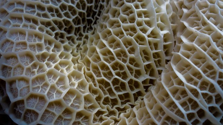 It takes guts - A closeup of Honeycomb tripe which is the 2nd stomach of a cow. This was for sale at one of the meat markets.