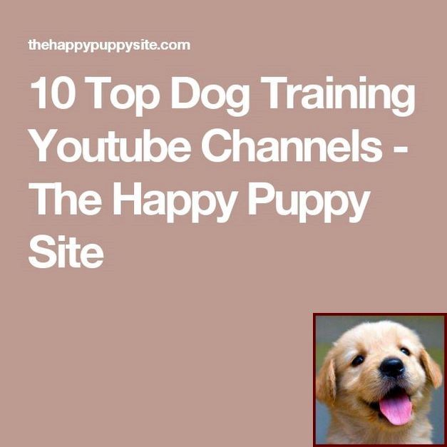House Training A Puppy Services And Dog Behavior Jokes Dog