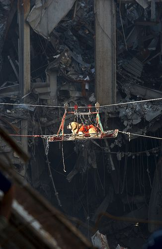 A search and rescue working dog is transported out of the depris of the World Trade Center in New York City by Beverly & Pack, via Flickr