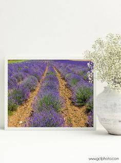A farmhouse decor lavender art print, French style, fine art photograph for wherever you want a touch of colour and style in your home. Brightly coloured lavender in a field in the south west of France. Click through to see in more detail!  #artprints #artprintsforsale  #artprintsonwall