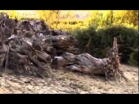 Cambio Climático - Documental National Geographic - YouTube
