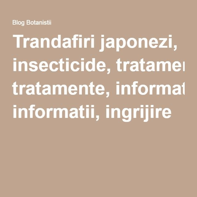 Trandafiri japonezi, insecticide, tratamente, informatii, ingrijire