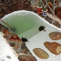 M s de 25 ideas incre bles sobre estanque de tortugas en - Estanques para tortugas de agua ...
