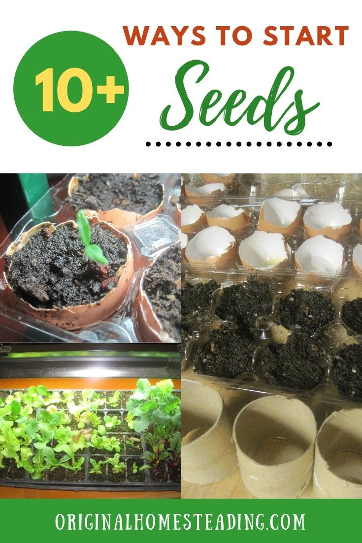 garden seed starting ideas: 10 ways you must try | starting