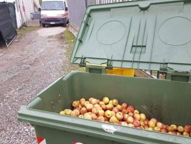 la croce rossa getta nei cassonetti le mele