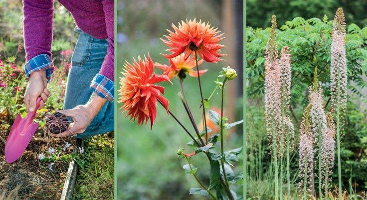 Fleurs : que planter en novembre ? | Que planter en ...