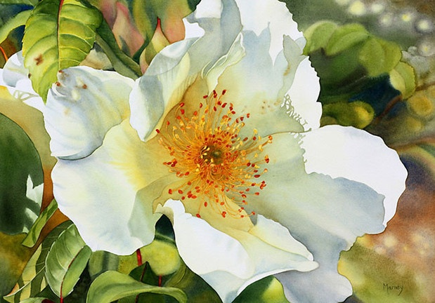 Flower painting Marney Ward - stunning...