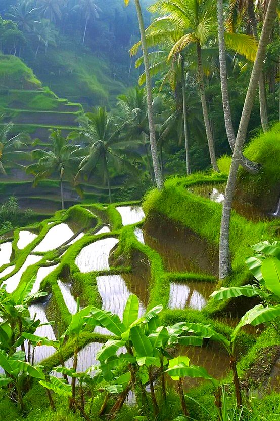 It's so GREEN!   At the moment, we are really getting tired of the color white.  I think it's time for a trip!    Ubud, Bali