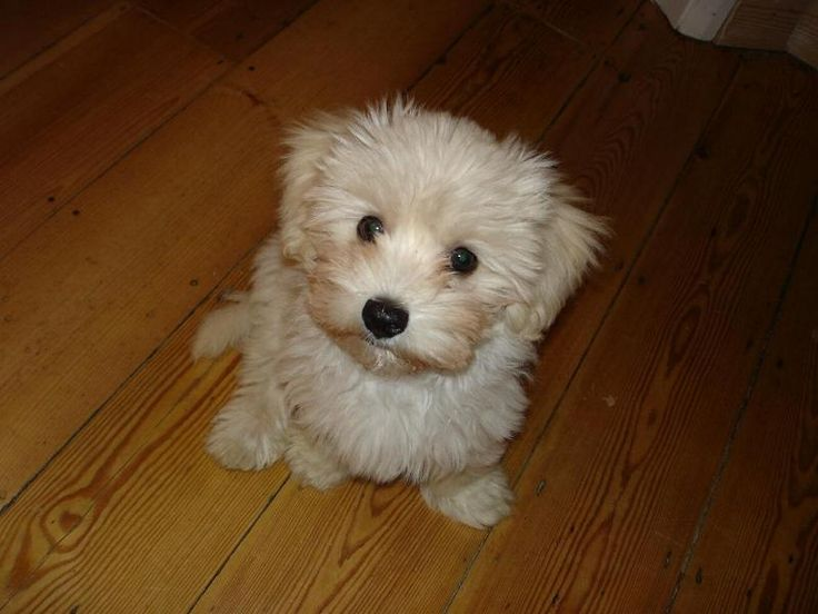101 best images about cutest dogs ever on Pinterest ...