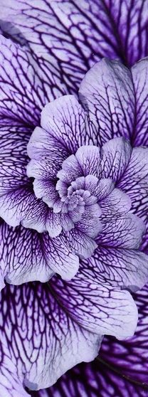 ✯ Hubble Flowers --This world is really awesome. The woman who make our… …